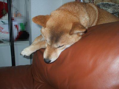 ソファで熟睡
