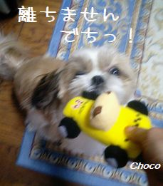 20061222cho2.jpg