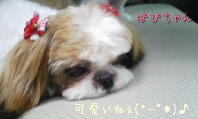 200805papchan.jpg