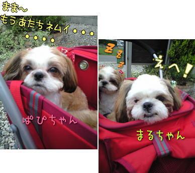 20080606pmchan.jpg