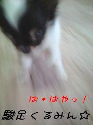 PAP_0810a3.jpg