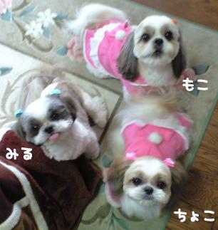 image3_20080216183211.jpg