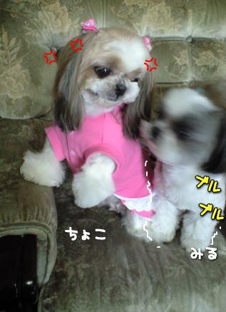 image9_20080216183242.jpg