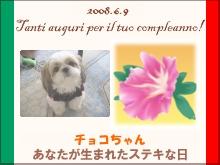 shih_tzu202.jpg