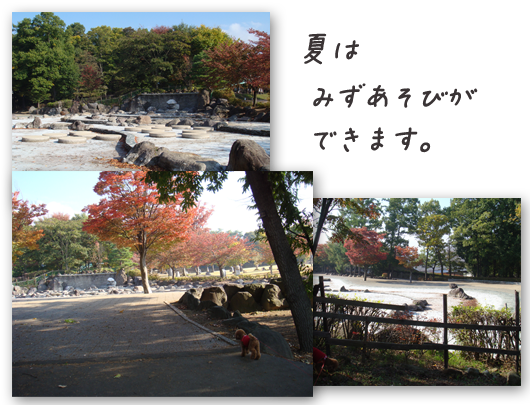 20081019-03.png