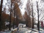 通学路冬景色