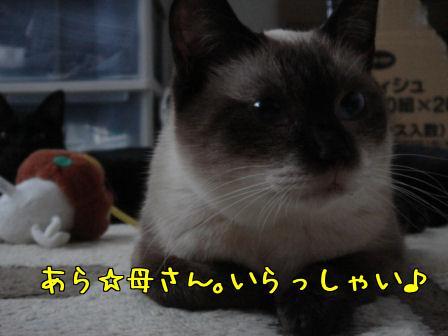 9Wlwtm73.jpg