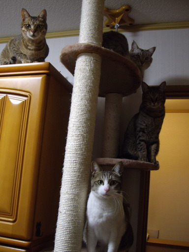 ネコタワー