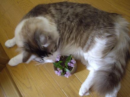 ココと花2