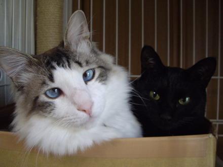 ココ&ルナ2