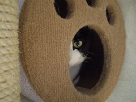 家政猫は見た1