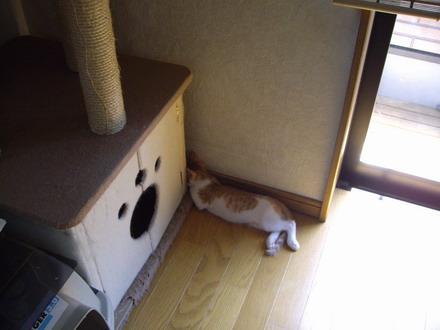 ちび昼寝1