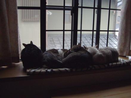 猫ダンゴ2
