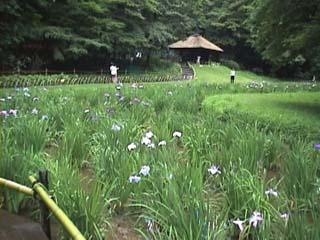 Meiji1.jpg