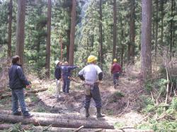 杉原木伐採