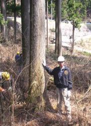 伐採木(杉・80年)決定