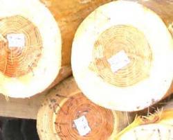 森林認証材・保管状況