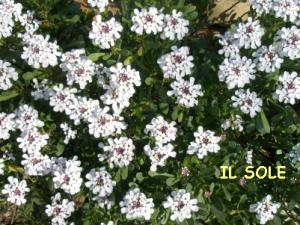白いお花*