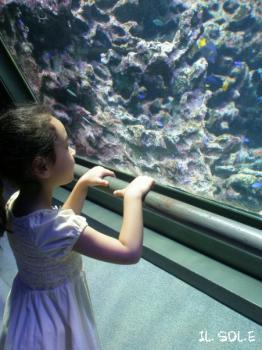 きれいなお魚さんたち
