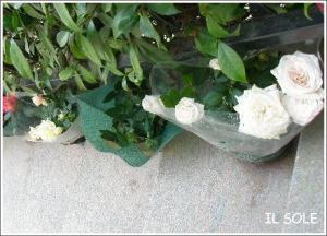 薔薇の鉢植え