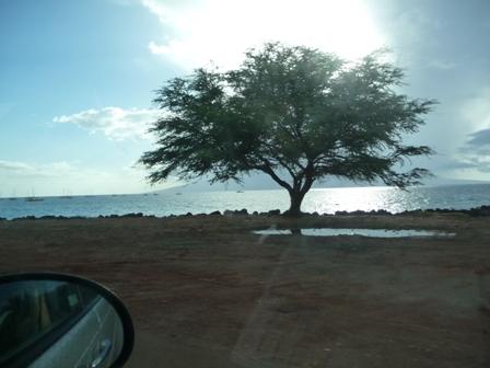 2009 HAWAII 173