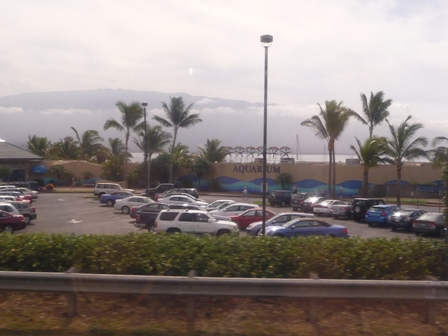 2009 HAWAII 259