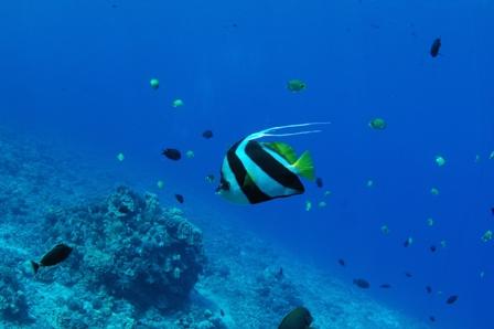 snorkel 015