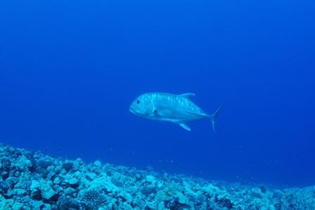 snorkel 008
