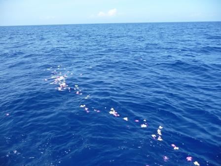 2009 HAWAII 571