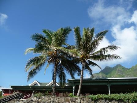 2009 HAWAII 831