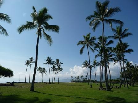 2009 HAWAII 841