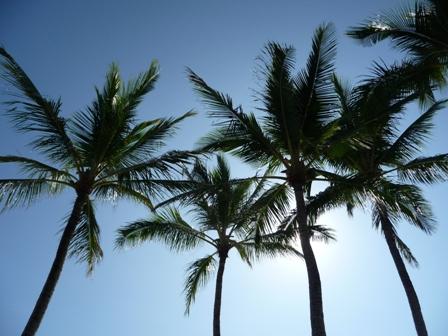 2009 HAWAII 842