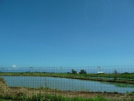 2009 HAWAII 865