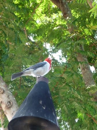 2009 HAWAII 933