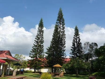 2009 HAWAII 965