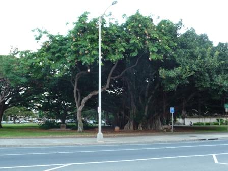 2009 HAWAII 980