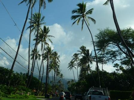 2009 HAWAII 1045