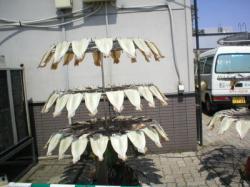 自動魚干し機