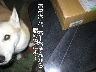 20060904b.jpg