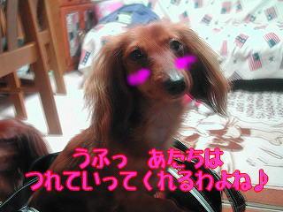 s-DSCN3641.jpg