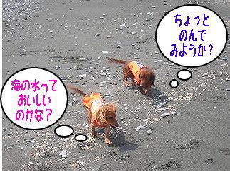 s-DSCN3946.jpg