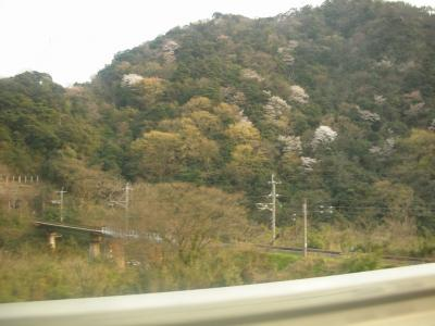 070411yamasakura1b.jpg
