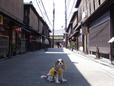 コピー - shigataikai.kyouto 172