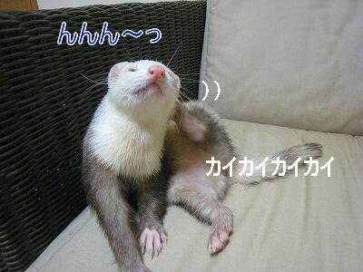 19.9.4.1.jpg