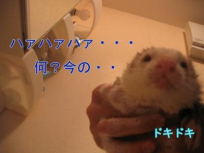 20060520223752.jpg