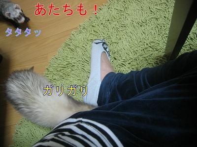 20060522212315.jpg