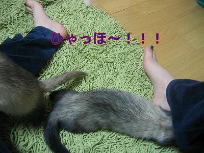 20060522212411.jpg