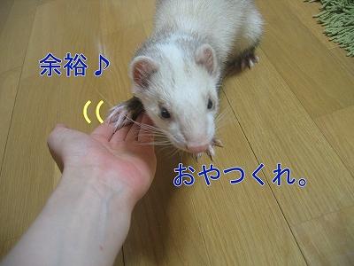 20060523211208.jpg