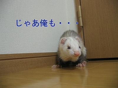 20060523211214.jpg