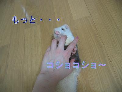20060523211230.jpg